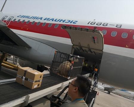 济南航空货运运输流程